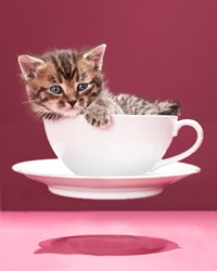 kitten on flying saucer